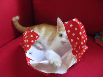 kitten no name