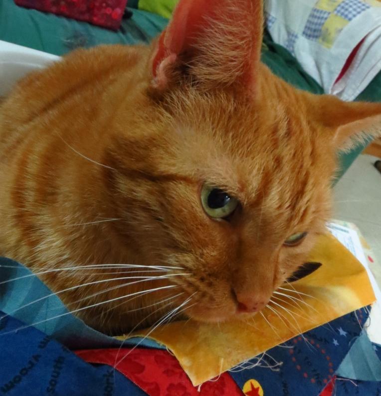 kitty 22