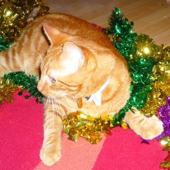 tinsel kitty 6